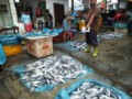 Dampak Bangkai Babi Di Sungai Bedagai, Omset Pedagang Ikan Menurun