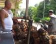 Petani Keluhkan Rendahnya Harga Sawit
