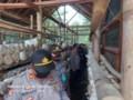 Kapolres Batu Bara Kunjungi Lokasi Tanaman Hidroponik