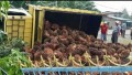 Diduga Supir Asyik Bercanda Dengan Kekasih, Truck Bermuatan Sawit Terguling di Jalinsum
