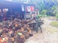 Kenangan Anggota Satgas TMMD Kodim 0204/DS Bantu Angkut Panen Sawit