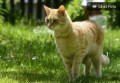 Mengapa Kucing Liar Menyemprotkan Urine di Halaman Rumah?